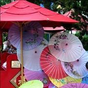 Chinese Umbrella Parasols